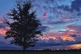 Morning Sunrise Sunset Aesthetic California Sun Palm Trees Clouds Photography Amateur Ocean Bay Sea