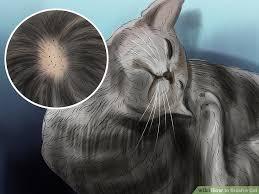 my cat has dandruff 3 ways to brush a cat wikihow
