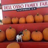 Del Oso Pumpkin Patch Lathrop Ca by Dell U0027osso Family Farms 567 Photos U0026 363 Reviews Festivals