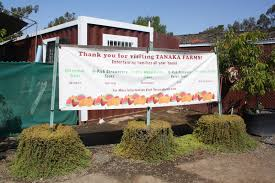 Oak Glen Pumpkin Patch Address by Tour Of Tanaka Farms Pick Your Own Strawberry Experience Any Tots