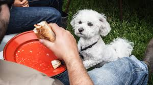 Turkey And Pumpkin For Dog Diarrhea by The Human Foods That Are Safe For Dogs