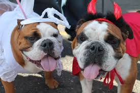 Old Westbury Gardens Dog Halloween by Howl O Ween Pet Parades On Long Island Lipetplace