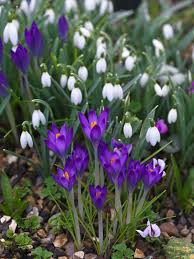 bulbs for every month of the year