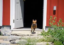 Stop dog from running out the door training small dogs that bite