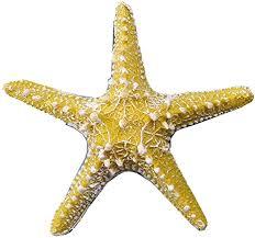 cheerlife 2 stück künstlich seesterne heim deko badezimmer mittelmeer fisch tank landschaft ornamente aquarium zum dekorieren basteln diy gelb