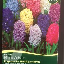 bulbs hyacinth mixed colours bulbs for sale mail order