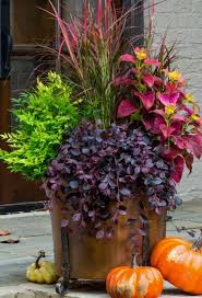 Monrovia Pumpkin Patch by 810 Best Halloween Fall Planters Images On Pinterest Fall