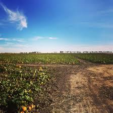 The Great American Pumpkin Patch Arthur Il by September 2014 Backyard Industry