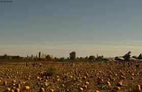 Portland Pumpkin Patch Corn Maze by Sauvie Island Pumpkin Patch Portland Oregon Pacific Northwest