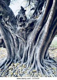 Abstract Tree And Its Roots