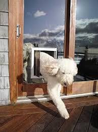 Best Pet Doors For Patio Doors by 75 Best Dog Doors Our Products Images On Pinterest Pet Door