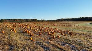 Columbus Pumpkin Patch by 6 Perfect Pumpkin Patches To Check Out Around Columbus