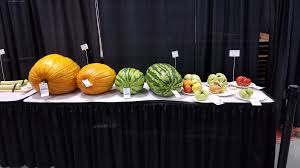 Atlantic Giant Pumpkin Record by Home Indiana Pumpkin Growers Association
