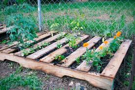 Image Of Pallet Garden Tomatoes