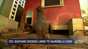 CONSUMER ALERT: What Has Caused Recent... - NBC Nightly News With ... The 25 Best Salmonella Symptoms Ideas On Pinterest Memes True Pharmacologist Warns That Eggs From Backyard Chickens Pose Chicken Chick Salpingitis Lash Eggs In Backyard Chickens Raising Chickenswhat You Need To Know Penn State Food Safety Blog And The Higher Risk Health Concerns When Tending Tahoetruckee Nationwide Salmonella Outbreak Linked Pet Makes 611 Sick Nbc News Outbreaks 47 States How Not Get Your Chicken