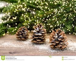Eustis Christmas Tree Farm by Pine Cone Christmas Tree Lights Christmas Lights Decoration