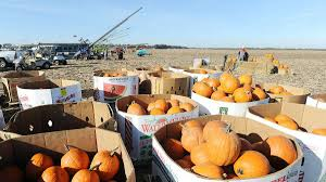Pumpkin Chunkin Delaware by Punkin Chunkin Cancelled After Lawsuit Future Uncertain Whyy