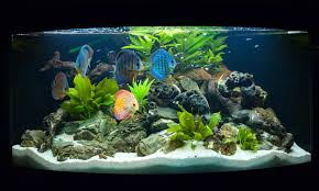 aquarium d eau douce aquarium eau douce tours le mans orléans etablissement guibert