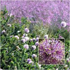 6 Threatened And Endangered Australian Flowers