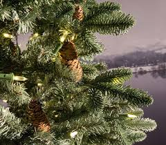 Slim Pre Lit Christmas Tree Canada by 6ft Frosted Dover Blue Spruce Slim Feel Real Artificial Christmas