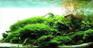 Aquascaping Tropical Fish Tank Colorful Aquariums Fish Tanks And ... Images Tagged With Aquascape On Instagram Aquatic Eden Aquascaping Aquarium Blog Aquascape Pinterest How Much Does It Cost To Run A Fish Tank Tropical Site 20 Of The Most Beautiful Places On Planet This Is Why You Can Natural Httpwwwokeanosgrombgwpcoentuploads2012 Takashi Amano Creator Of The Nature Love Aquascapenl Twitter Hardscape Axolotl Fish And Aquariums Planted Red Green By Adrian Nicolae Design