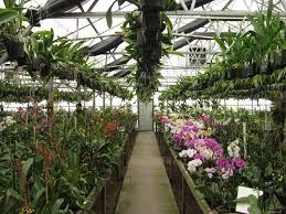 Orchid adventure