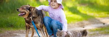 burke animal clinic michael burke vet clinic