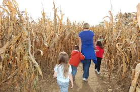 Southern Ohio Pumpkin Patches by Columbus And Central Ohio Pumpkin Patches Corn Mazes Hayrides