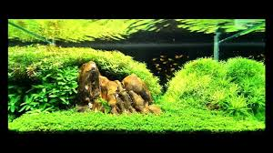 SuperWen's 2012 Aquascape - Petrified - YouTube Aquascaping Fish Tank Projects Aquadesign George Farmers Live Aquascaping Event At Crowders Ipirations Mzanita Driftwood For Inspiring Futuristic Home Planted Riddim By Alejandro Menes Aquarium Design Contest Ada Horn Wood Beautiful Natural Hardscape For Superwens 2012 Aquascape Petrified Youtube Fish Aquariums The Worlds Best Planted Aquarium Products Designs Reviews Out Of Ideas How To Draw Inspiration From Others Aquascapes 7 Wood Images On Pinterest Sculpture Lab Tutorial Nano Cube Size 20 X 25h