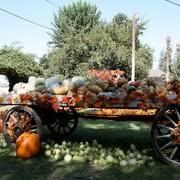 Pumpkin Patches Near Bakersfield Ca by Banducci Harry Farms Fruits U0026 Veggies 18500 Millux Rd