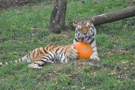 Brookfield Zoo Halloween 2014 by 15 Recipes For Leftover Halloween Candy Frecklebox Blog Dressed