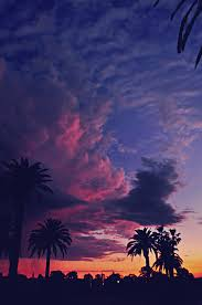 Photography Photo Photograph Cali California Palm Trees Sunset Vertical