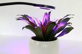 pflanzen fürs badezimmer ohne fenster 10 grünpflanzen