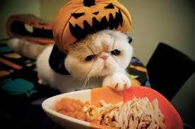 Funny Pumpkin Carvings Youtube by Pumpkin Vampire Kitty Youtube