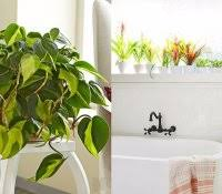 Good Plants For Bathroom by Cactus In Bathroom Plants For Windowless Best Gardening Images On