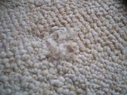 Super Glue On Carpet by Repair Cigarette Burns On Carpet 4 Steps With Pictures