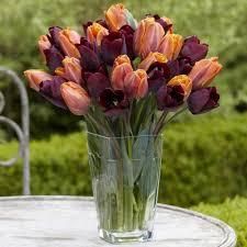 tulip princess irene ronaldo longfield gardens