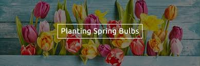 the 8 best flowering bulbs to plant in autumn