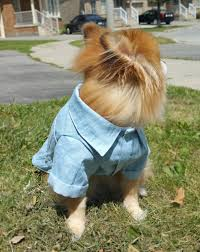 Smashing Pumpkins Shirt Etsy by Dog Light Jean Shirts Denim Shirts Puppy Dress Shirt Dog