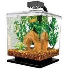Spongebob Aquarium Decor Amazon by 98 Best D U0027s Birthday Purchases Images On Pinterest Fish Tanks