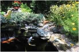 Backyards: Compact Backyard Koi Pond. Backyard Koi Pond Pictures ... Backyards Excellent Original Backyard Pond And Waterfall Custom Home Waterfalls Outdoor Universal And No Experience Necessary 9 Steps Landscaping Building Relaxing Small Designssmall Ideas How To Build A Emerson Design Act Garden With Wonderful With Koi Fish Amaza E To A In The Latest