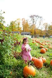 Pumpkin Picking In Ct by Pumpkin Picking At Warrup U0027s Farm U2013 Twilight At Morningside