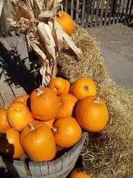 Southern Illinois Pumpkin Patches by 22 Best Mccalls Pumpkin Patch Images On Pinterest Pumpkin