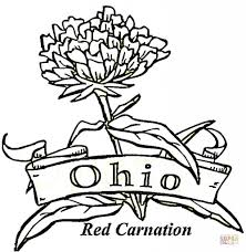 Ohio State Brutus Pumpkin Stencil by 100 Ohio State Pumpkin Carving Ideas Amazon Com Nfl