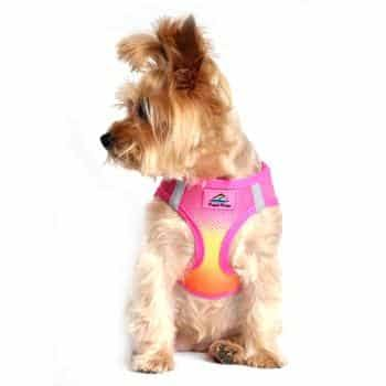 American River Choke-Free Dog Harness - Raspberry and Orange Sorbet Ombre Large