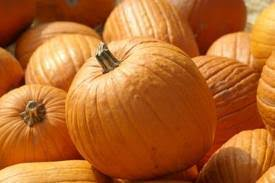 Miami Lakes Church Pumpkin Patch by Momma U0027s Of Broward County South Florida Pumpkin Patch Listings