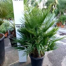 les plantes exotiques et graphiques vente plantes de terrasses