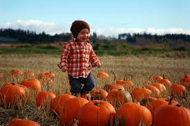 Sacramento Pumpkin Patch With Petting Zoo by Best Pumpkin Patches Across The Bay Area