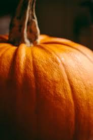 Storing Pumpkin Pieces by The Final Pumpkin U2014 Tales Of A Greenwood