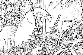 14 Directed Drawing Toucan For Free Download On Ayoqqorg
